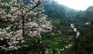 Lễ hội hoa ban Điện Biên