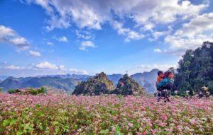 Lê hội hoa Tam Giác Mạch